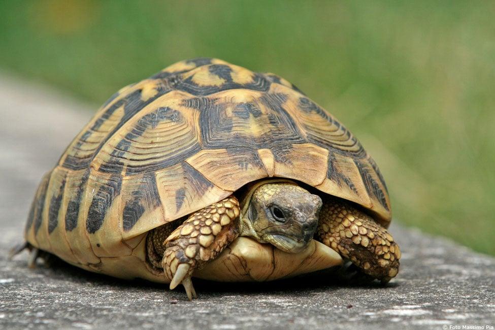 """ISF scrittori. """"Il giorno della tartaruga"""" di Cosso"""