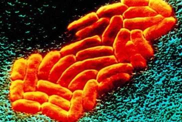 Cameron: i batteri resistenti agli antibiotici sono «una minaccia per l'umanità»
