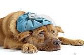 Via libera alla ricetta veterinaria elettronica