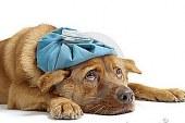 Tassa sui cani non sterilizzati?