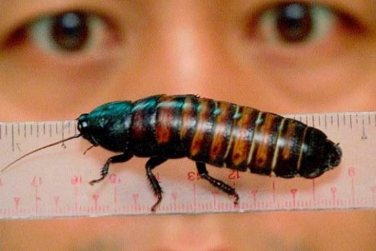 Cina. Società farmaceutica crea farmaci con gli scarafaggi