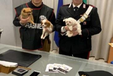 ISF scopre traffico illecito di cani. Due denunciati