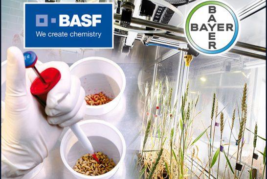 Bayer e Basf sconfitte in tribunale, al via maxi risarcimento: storica sentenza sul Dicamba